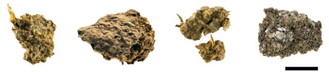 Four samples of preserved human fecal matter collected from the Hallstatt salt mines.